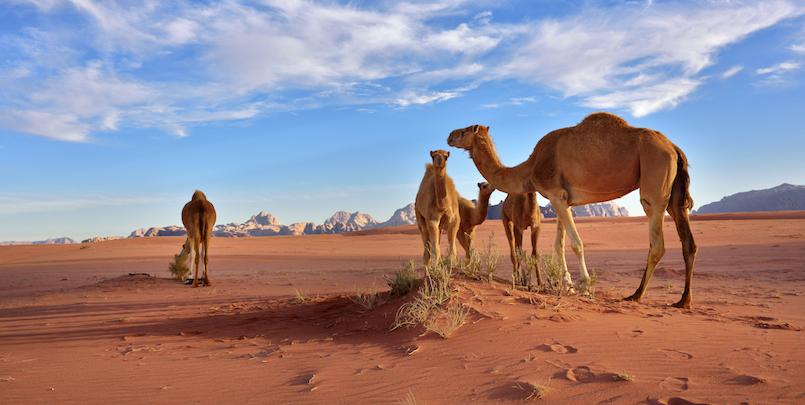 Jordan for the whole Family – also in the Desert