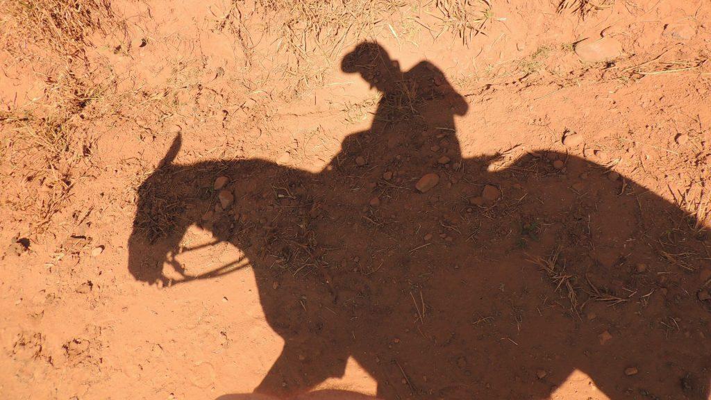 horses in jordan